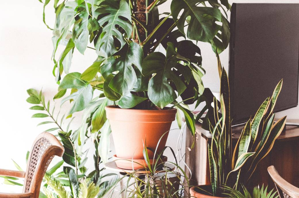 Zimmerpflanze Pflegeleicht monstera und sukkulenten pflegeleichte zimmerpflanzen stylebook